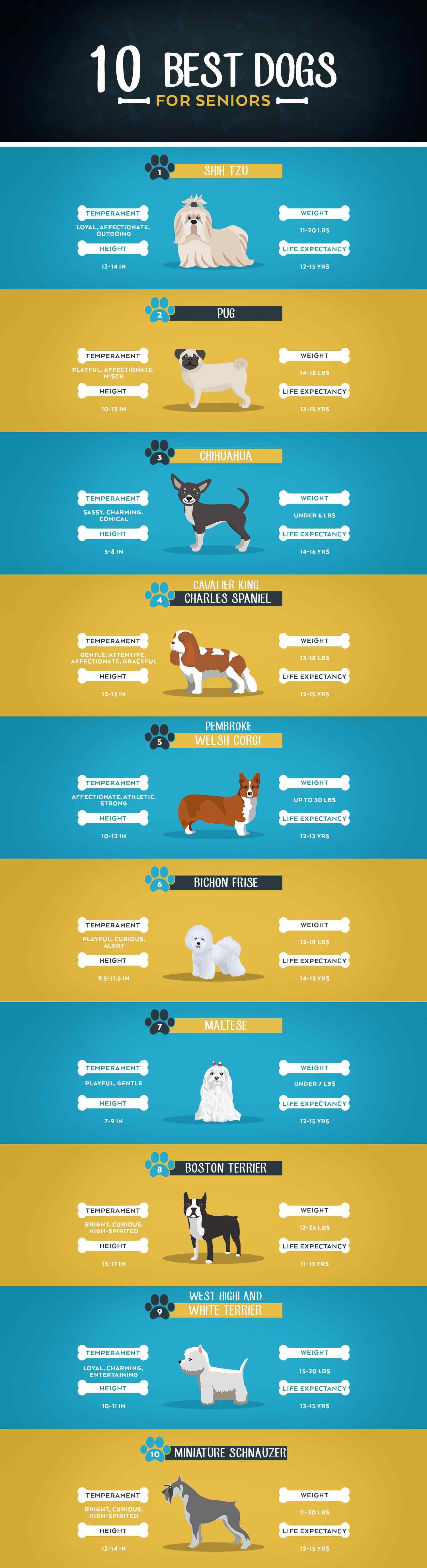 top 10 dog breeds for seniors infographic